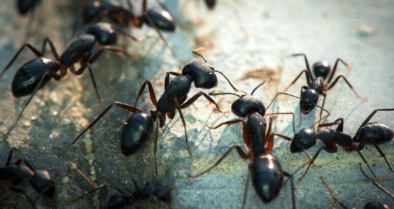 Ant Control Bakersfield CA