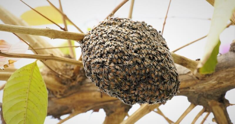Bee Removal Services in Bakersfield CA