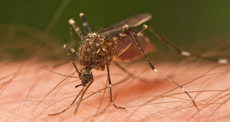 mosquito control in Bakersfield
