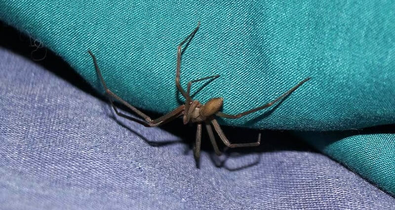 spider control in Bakersfield